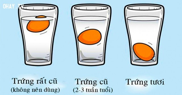 Lựa chọn trứng phù hợp
